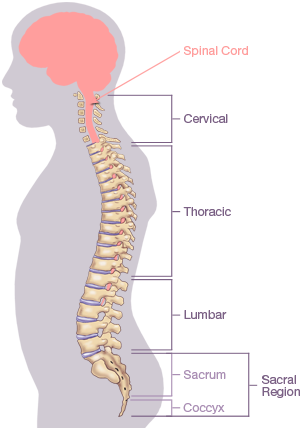 Back Spine Diagram Another Wiring Diagrams